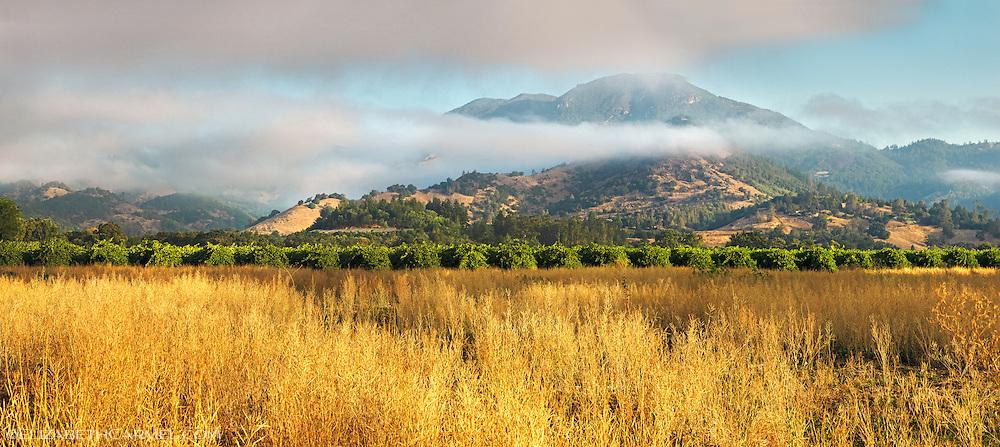 Mt. St. Helena Panorama