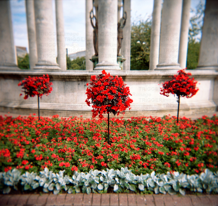 Three red flower bushes in a public garden