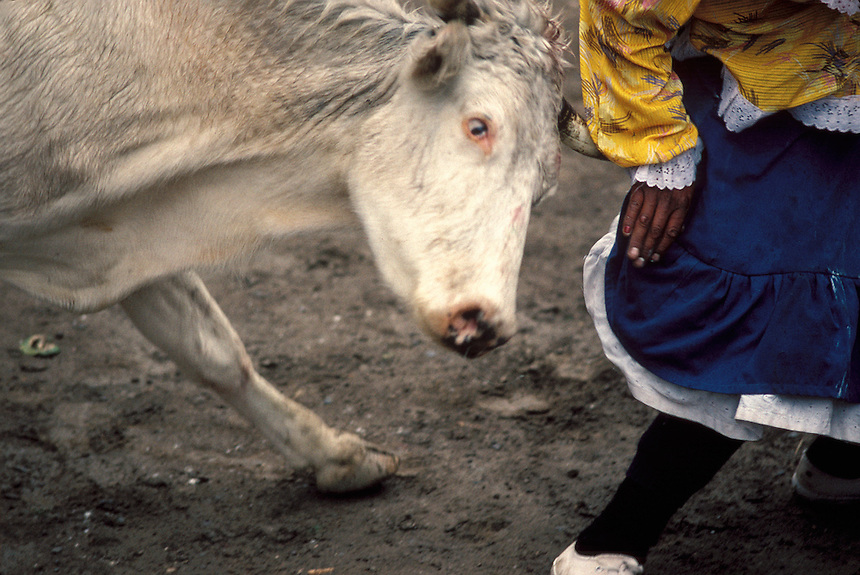 A clown is grazed by the horns of a local steer during an amateur bullfight in Ollantaytambo, Perú. The animals, all valuable property of the residents, were spared the sword.