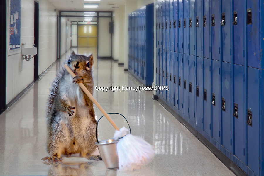 """BNPS.co.uk (01202 558833).Pic: NancyRose/BNPS..***Please Use full byline***..A group of wild squirrels have been snapped posing with human objects for a hilarious set of adorable photographs...Nancy Rose, 58, was inspired to take the quirky images when she spotted a squirrel sitting on top of a pumpkin she had left in her garden...She began building her own 'props' for the creatures to interact with, and left miniature items outside surrounded by nuts on her garden decking to entice them closer...She created a tiny washing machine, tumble dryer, hats, coats, musical instruments, easel and paint pallette, a boat and a fire place and waited for the animals to visit...The inquisitive squirrels have gradually learnt that they find nuts if they pick up or look inside the items, and have started frequenting the garden more often...Nancy patiently waits with her camera and takes more than 100 frames of each squirrel as they move incredibly fast...Nancy, a school counsellor from Nova Scotia in Canada said: """"My squirrel pictures started almost by accident."""