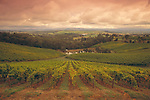 Australia vineyard