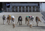 Greyhound racing at tghe Naples-Ft. Myers Greyhound Trsck in Bonita Springs. Erik Kellar
