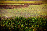 LITTLE ST. SIMONS ISLAND, FL -- October 1, 2010 -- Grasses sway on Little St. Simons Island on Friday, October 1, 2010.   The 10,000 acres of marshland, beaches, and forests are a refuge for wildlife and vacationers alike with only 32 guests permitted a night.  (Chip Litherland for Bay Magazine)