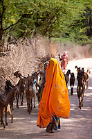 Indian villager with herd of goats in village near Ranthambore in Rajasthan, Northern India