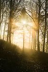 Backlit forest scene on a misty morning
