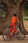 T-033 Kermes Oak in Jat