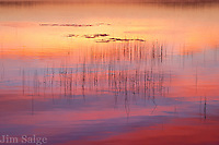 Reeds and lily pads provide context to the reflection of a beautiful sunrise in Lake Massabesic.