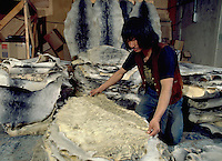 Images from assignment work in Igloolik, Eastern Canadian Artic, in 1985-1986.  Igloolik is an Inuit community with traditional hunting and fishing and a strong sense of self government. Quarintin Pulotsia sorting and stacking Silver Jar Seal skins in Igloolik Coop warehouse.