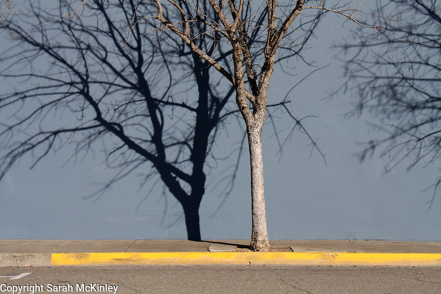 A bare tree casts a shadow in the late winter sunlight on a street in downtown Ukiah in Mendocino County in Northern California.