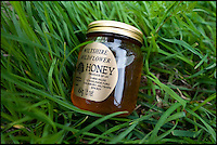 BNPS.co.uk (01202 558833)<br /> Pic: Phil Yeomans/BNPS<br /> <br /> Uniquely flavoured honey.<br /> <br /> Abandoned villlage becomes a hive of activity once more.<br /> <br /> The deserted village of Imber in the heart of Salisbury Plain has new residents again - 70 years after the army controversially kicked out the 200 parishoners during WW2.<br /> <br /> Bee farmer Chris Wilkes has placed 12 hives of the plucky British black bee behind St Giles church in the hamlet to feast on the extraordinary wildflower habitat of the plain that has been protected from pesticides and intensive farming siince the Army moved in.<br /> <br /> The isolation of the village will in fact ensure that the unique colony can thrive five miles from competing honey bee populations and with a cornucopia of the top nectar producing flowers in the UK surviving on the chalk downlands to feed on Mr Wilkes is hoping that the population will establish itself and produce a honey with the distinctive flavour of one of Britains last wilderness areas.