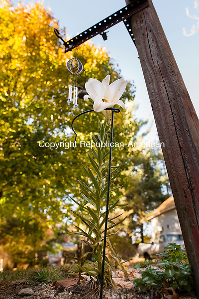 THOMASTON, CT- 26 October 2015-102615EC01-  A late blooming Easter lily makes an appearance in Thomaston Monday, surprising the owner of the property, Mimi Desrochers. She received the flower in April and planted the bulb in the ground after the flower died. She forgot about it until recently when she noticed the new growth. The plants traditional flowering months are from April to June. Erin Covey Republican-American
