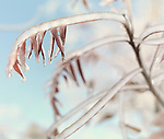 Artistic abstract closeup of frozen, covered with ice tree branches and leaves on a sunny autumn morning
