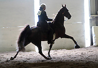 Sue Williams, from McCleary, Wash., rides, Tee Time,during the Northwest Walking Horse Classic in Spanaway, Wash. on July 11, 2015.  (© Karen Ducey Photography)
