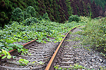 Weeds begin to claw their way across a stretch of disused railway line in Minamisanriku, Miyagi Prefecture, Japan on 11 Sept. 2011.  Photographer: Robert Gilhooly