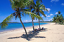 Beach and family under cocopalm trees at Sun Bay, Vieques Island, Puerto Rico.
