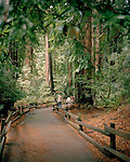 Muir Woods National Monument, California