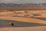 Algodones Dunes, Glamis, California; North Algodones Dunes Wilderness, sand dunes, a tumble weed and mountains in the distance in late afternoon sunlight