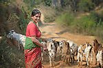 Bishnu Kumari Banjara herds some of her goats in Dhawa, a village in the Gorkha District of Nepal. Following the 2015 earthquake that ravaged Nepal, she received several baby goats from Dan Church Aid, a member of the ACT Alliance, as a way to earn a livelihood and restart the village economy. Helping people in this and other largely Dalit villages has been a priority for ACT Alliance agencies.