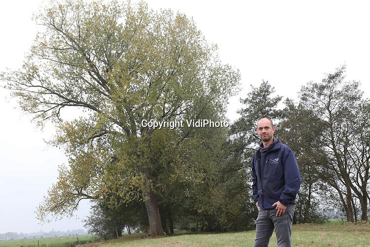 Foto: VidiPhoto<br /> <br /> LANGERAK - Marien Verwolf van Waterschap Rivierenland bij een populier in de polder van Langerak.