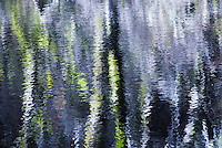 Early morning at Eel Lake, Oregon. The reflections of birch trees upon the water giver an eerie and impressionistic feeling to the image.