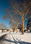 Snow makes a dramatic, bright coating and provides a beautiful, serene contrast to the clear blue sky along Scarborough Avenue in Rehoboth Beach, Delaware, USA, the morning after the blizzard of February 2010.