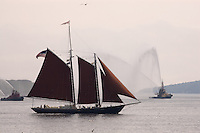 Schooner tall ship with fire boats and sea gulls, Halifax Harbour Nova Scotia Canada North America