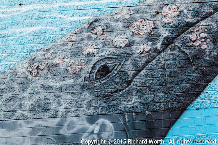 "Exploring the detail of a whale mural on a bulding along San Francisco Bay.  The mural is signed and dated, ""Greenwood  2008""."