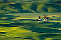 Palouse farm and wheat fields from Steptoe Butte, Washington.