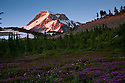 OR01679-00...OREGON - Sunrise on Mount Hood from Wy'east Basin in the Mount Hood Wilderness area.