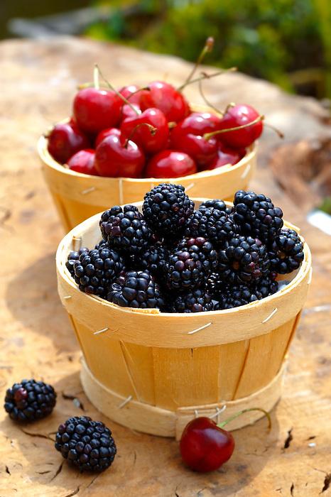 punet of fresh picked orgainic blackberries and cherries