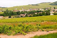 vineyard and village morgon beaujolais burgundy france