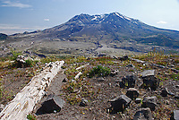 Mount St Helens, Washington State, USA, which last erupted in May, 1980. The rocks and uprooted plants from the eruption have deliberately  left where they landed to illustrate the force of the volcanic action.200809020894, volcano, lava..Copyright Image from Victor Patterson, 54 Dorchester Park, Belfast, N Ireland, BT9 6RJ...Tel: +44 28 9066 1296.Mob: +44 7802 353836.Email: victorpatterson@mac.com..IMPORTANT: Please go to www.victorpatterson.com and click on my Terms and Conditions of use.