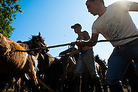 Ranchers tame wild horses with stick and rope in the arena during the Rapa das Bestas (Shearing of the Beasts) festival in Torroña, Spain, 5 June 2011. The herds of of wild horses roam freely the hills of Galicia in the north-western Spain. Each year, in the beginning of summer, villagers herd horses down from the higher ground, rounding them up in the curro, a centuries-old stone arena. Here, ranchers catch the animals one by one and shear their manes and tails. Some of the young men, showing up their strength and courage, fight the untamed horses just with their bare hands. At the end of Rapa das Bestas, a 400-year-old Spanish tradition, the newborn foals are branded and all horses are released back into the wilderness.