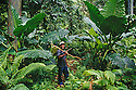 Kosrae, Micronesia: Tadao Waguk in tropical rainforest on the trail to Menke Ruins. .
