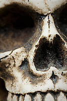 Skull Macro