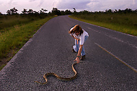 Park biologist Laurie Oberhoffer goes after an escaping Burmese Python that was caught <br /> along this road in Everglades National Park. One time pets get too big and hungry for owners to handle and they are released into the &quot;wild.&quot; In the 70s a few Burmese python citings were documented in the park. In the mid-90s, there were more reports. In the past two years, the number has grown and there is evidence that the snake that grows to 12 feet long is established and breeding in the park. Enough have multiplied that native Everglades wildlife is threatened.