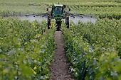 Farmer spraying vineyard, Champagne, France