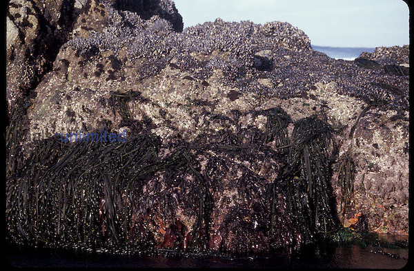 Vertical zonation at low tide, Pacific Grove, California, USA