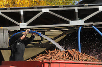 A farm hand hoses carrots out of a farm truck for washing.