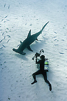 RR1838-D. Great Hammerhead Shark (Sphyrna mokarran), tall dorsal fin, head shape, and huge size (to 6 meters) helps distinguish from other hammerheads. Gestation 11 months, litter size 3-42 pups. Underwater photographer (model released) captures the moment. Bahamas, Atlantic Ocean.<br /> Photo Copyright &copy; Brandon Cole. All rights reserved worldwide.  www.brandoncole.com