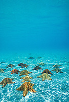 Sea Stars<br />