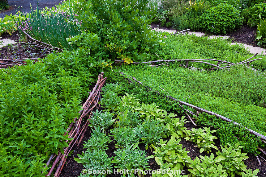 Rustic circular culinary herb country garden bed divided with twigs and branches