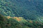 Early fall color along the Blue Ridge Parkway, North Carolina