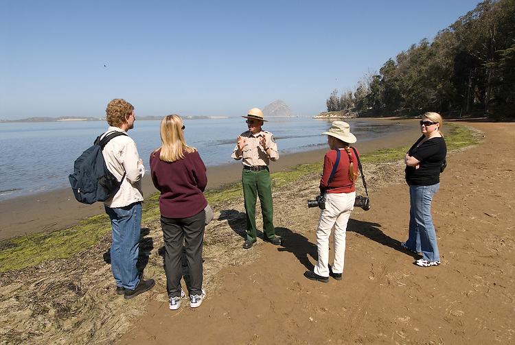 California, San Luis Obispo County: Morro Bay State Park, with Morro Rock, artists painting Morro Rock, rangers leading walks, and a heron rookery..Photo caluis170-71199 .Photo copyright Lee Foster, www.fostertravel.com, 510-549-2202, lee@fostertravel.com