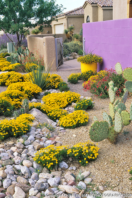 Llandscape architect and garden designer David Cristiani has taken drought tolerant native and adapted plants and set them against a dramatic colored wall at his residence in Albuquerque, New Mexico