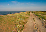 Sandy Road by Sea to Harilaid in Vilsandi National Park, Saaremaa,  Estonia