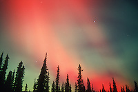 Aurora Borealis or Northern Lights, Alaska, USA.