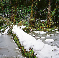 Snow and ice on water and fallen tree in Te Urewera National Park beside track to lake Waikareiti close to Lake Waikaremoana- New Zealand