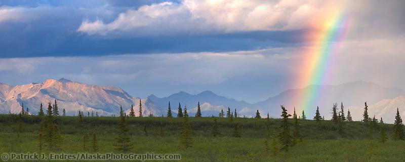 Panorama of a rainbow of the tundra in the Alaska Range mountains in Denali National Park, Alaska