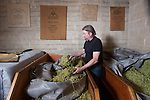Keith Greggor, president and CEO of Anchor Brewers & Distillers looks through some of the hops used in the beer at the Anchor Steam brewery in San Francisco, Calif.